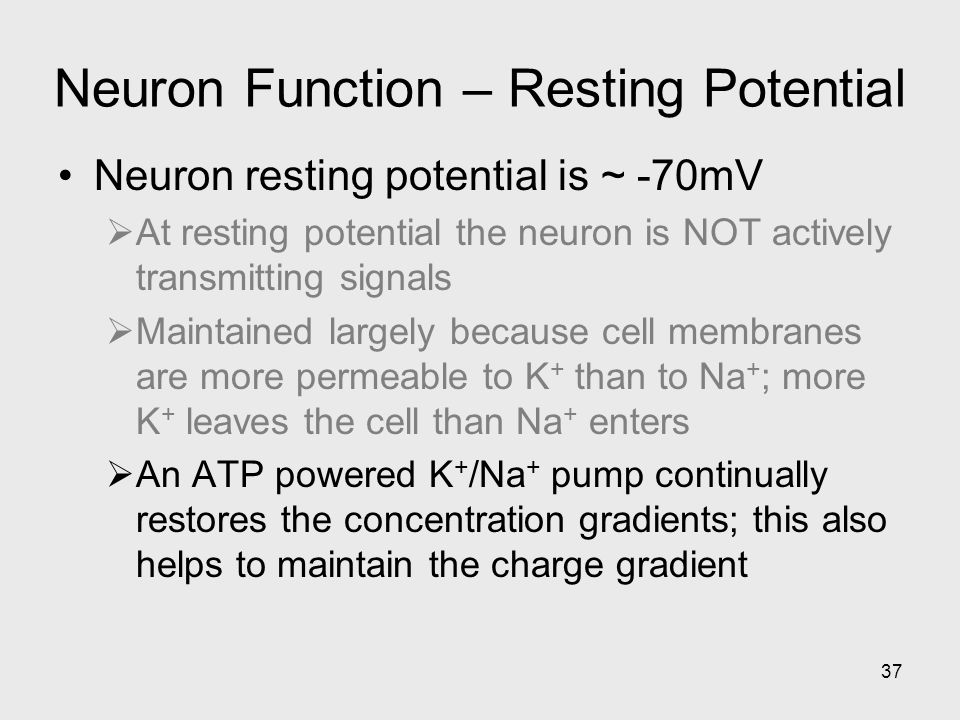 37 Neuron Function – Resting Potential Neuron resting potential is ~ -70mV  At resting potential the neuron is NOT actively transmitting signals  Maintained largely because cell membranes are more permeable to K + than to Na + ; more K + leaves the cell than Na + enters  An ATP powered K + /Na + pump continually restores the concentration gradients; this also helps to maintain the charge gradient