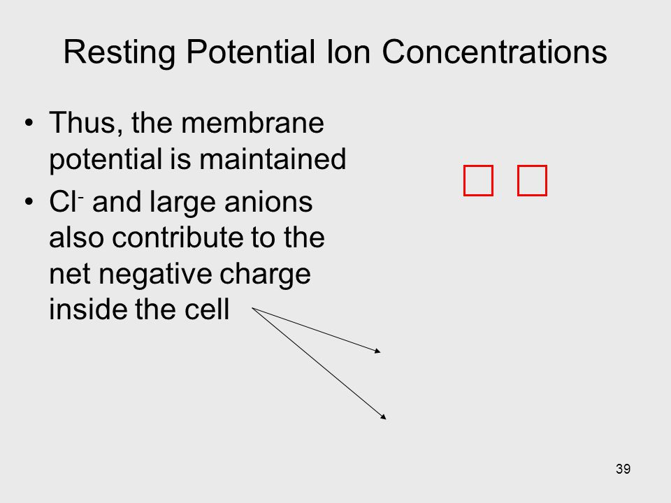 39 Resting Potential Ion Concentrations Thus, the membrane potential is maintained Cl - and large anions also contribute to the net negative charge inside the cell