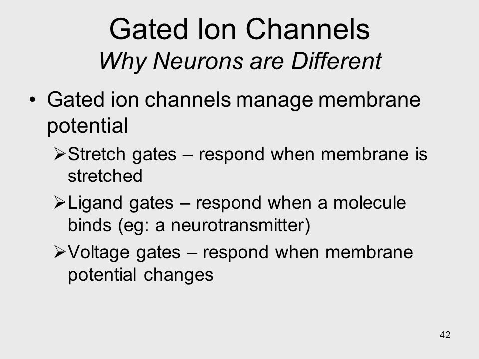 42 Gated Ion Channels Why Neurons are Different Gated ion channels manage membrane potential  Stretch gates – respond when membrane is stretched  Ligand gates – respond when a molecule binds (eg: a neurotransmitter)  Voltage gates – respond when membrane potential changes