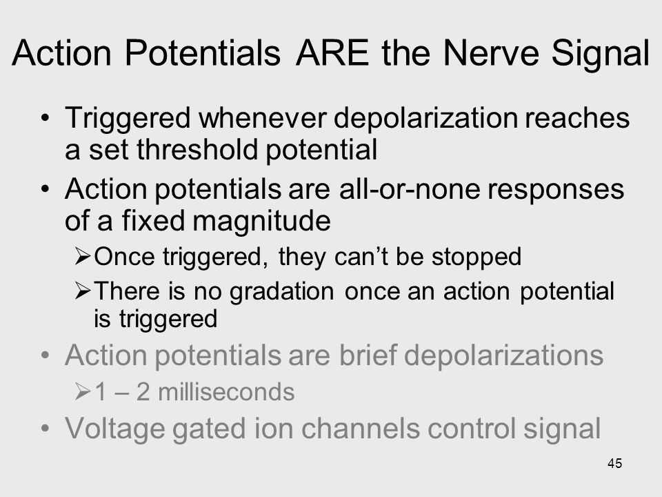 45 Action Potentials ARE the Nerve Signal Triggered whenever depolarization reaches a set threshold potential Action potentials are all-or-none respon
