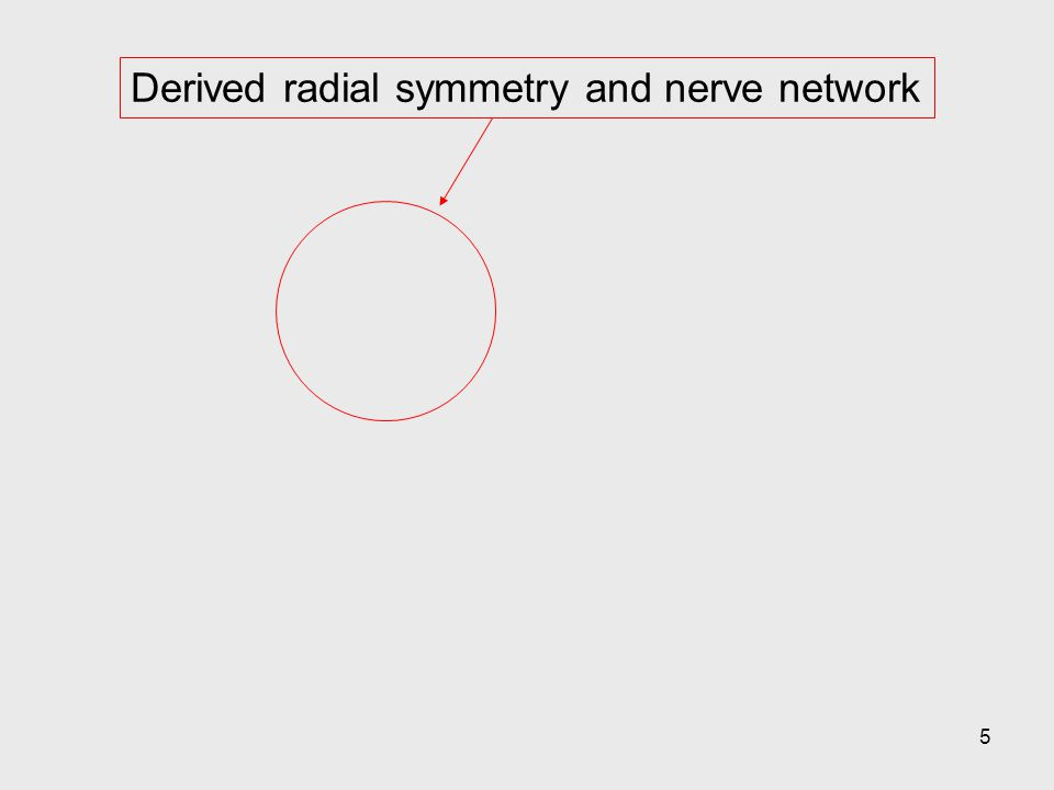 5 Derived radial symmetry and nerve network