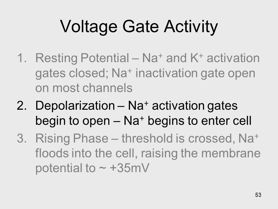 53 Voltage Gate Activity 1.Resting Potential – Na + and K + activation gates closed; Na + inactivation gate open on most channels 2.Depolarization – N