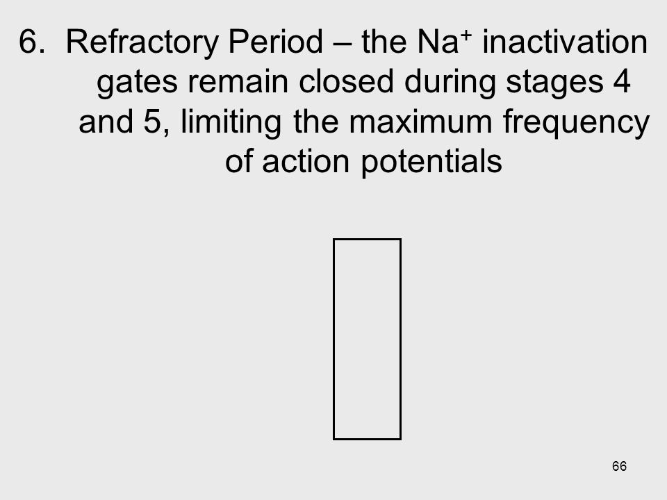 66 6. Refractory Period – the Na + inactivation gates remain closed during stages 4 and 5, limiting the maximum frequency of action potentials