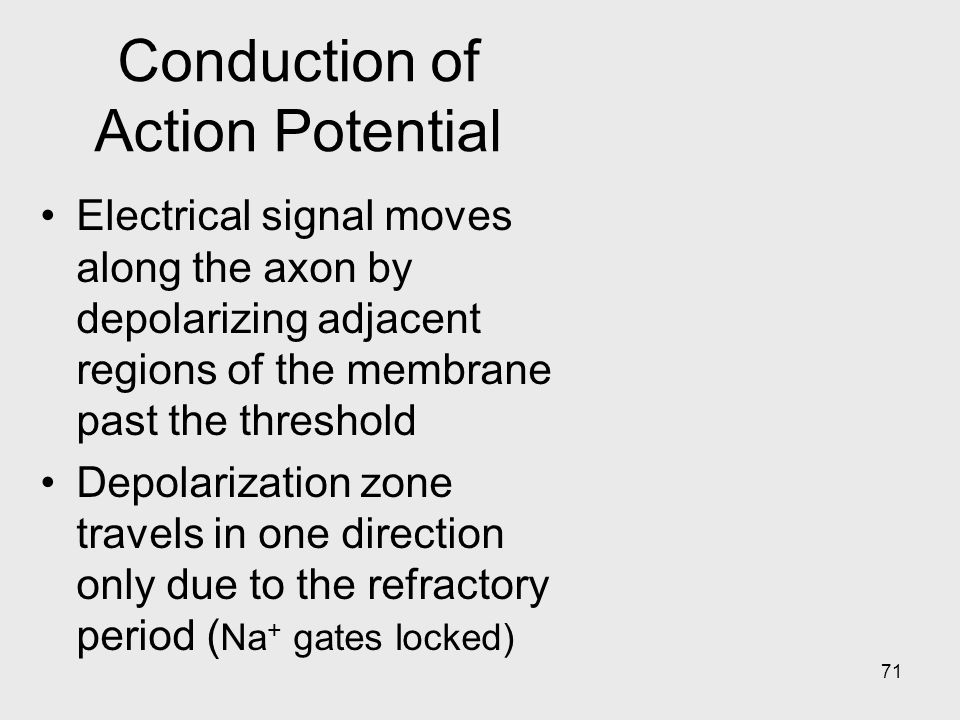 71 Conduction of Action Potential Electrical signal moves along the axon by depolarizing adjacent regions of the membrane past the threshold Depolarization zone travels in one direction only due to the refractory period ( Na + gates locked)