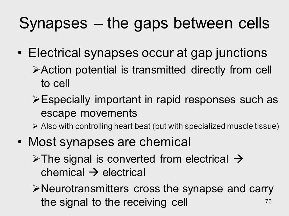 73 Synapses – the gaps between cells Electrical synapses occur at gap junctions  Action potential is transmitted directly from cell to cell  Especially important in rapid responses such as escape movements  Also with controlling heart beat (but with specialized muscle tissue) Most synapses are chemical  The signal is converted from electrical  chemical  electrical  Neurotransmitters cross the synapse and carry the signal to the receiving cell