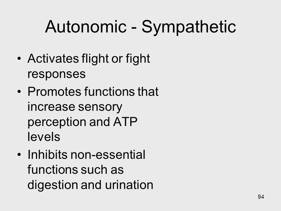 94 Autonomic - Sympathetic Activates flight or fight responses Promotes functions that increase sensory perception and ATP levels Inhibits non-essenti