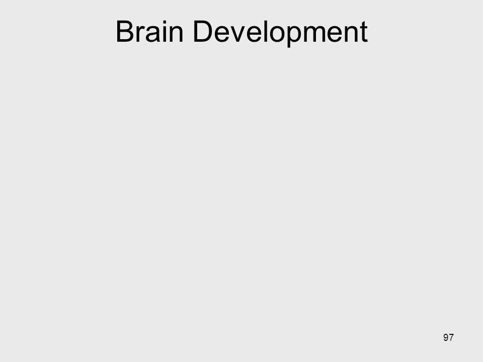 97 Brain Development