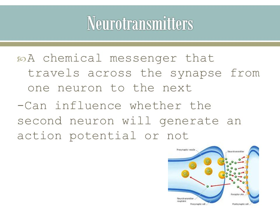  A chemical messenger that travels across the synapse from one neuron to the next -Can influence whether the second neuron will generate an action potential or not