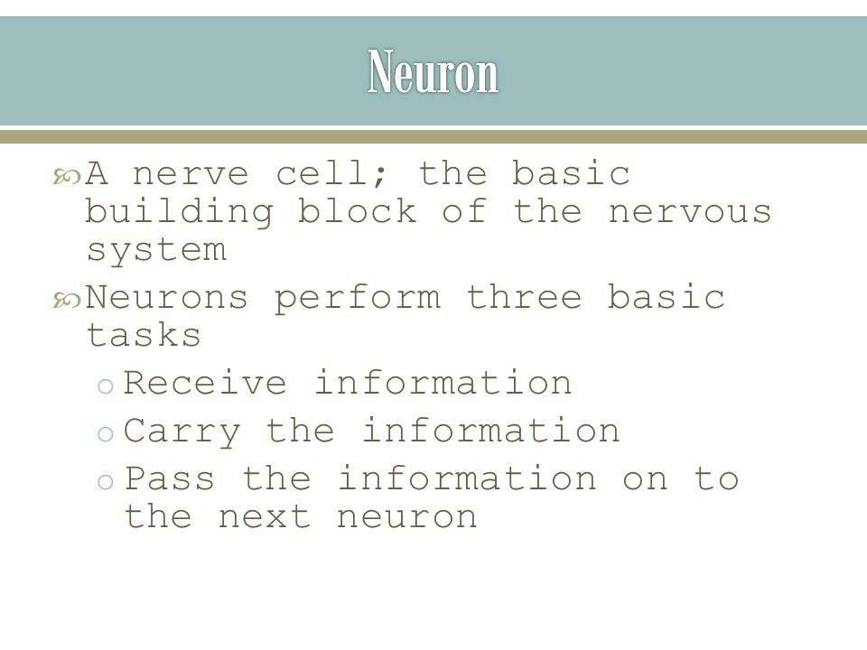  A nerve cell; the basic building block of the nervous system  Neurons perform three basic tasks o Receive information o Carry the information o Pass the information on to the next neuron