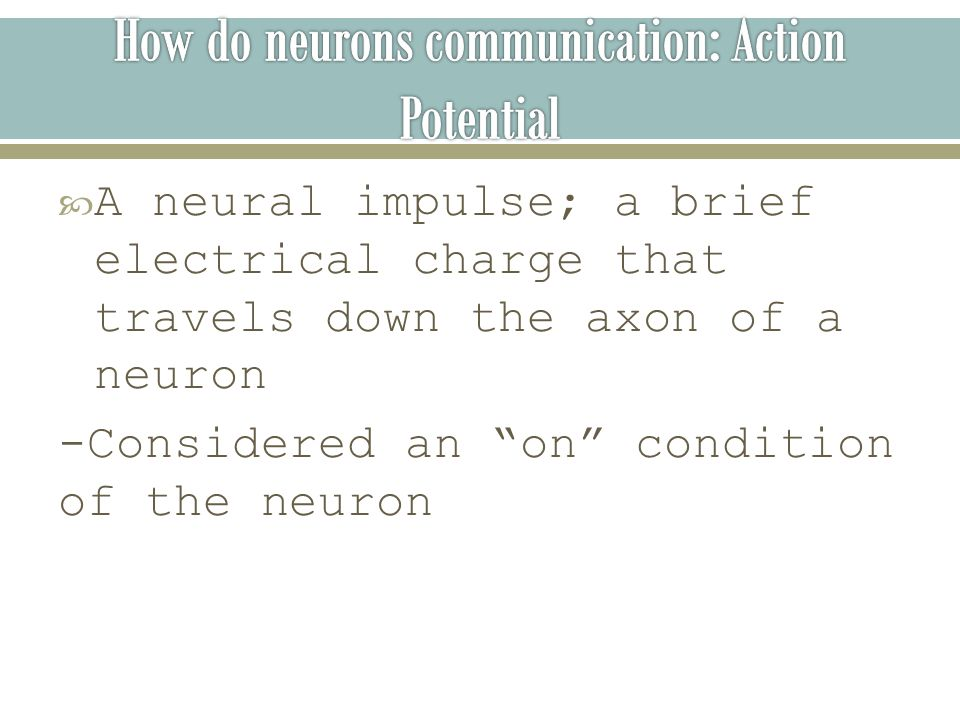  A neural impulse; a brief electrical charge that travels down the axon of a neuron -Considered an on condition of the neuron