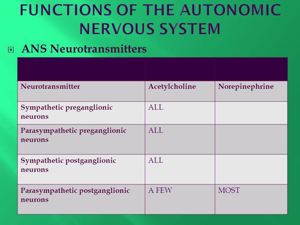  ANS Neurotransmitters NeurotransmitterAcetylcholineNorepinephrine Sympathetic preganglionic neurons ALL Parasympathetic preganglionic neurons ALL Sy