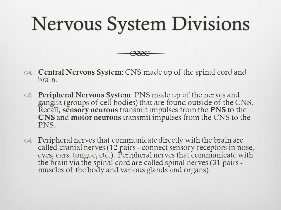  Central Nervous System : CNS made up of the spinal cord and brain.  Peripheral Nervous System : PNS made up of the nerves and ganglia (groups of ce