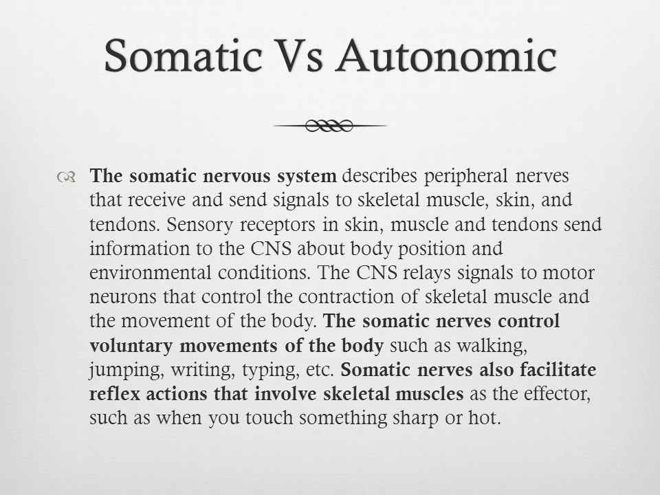 Somatic Vs AutonomicSomatic Vs Autonomic  The somatic nervous system describes peripheral nerves that receive and send signals to skeletal muscle, sk