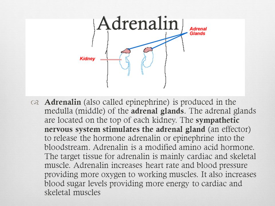 Adrenalin  Adrenalin (also called epinephrine) is produced in the medulla (middle) of the adrenal glands. The adrenal glands are located on the top o