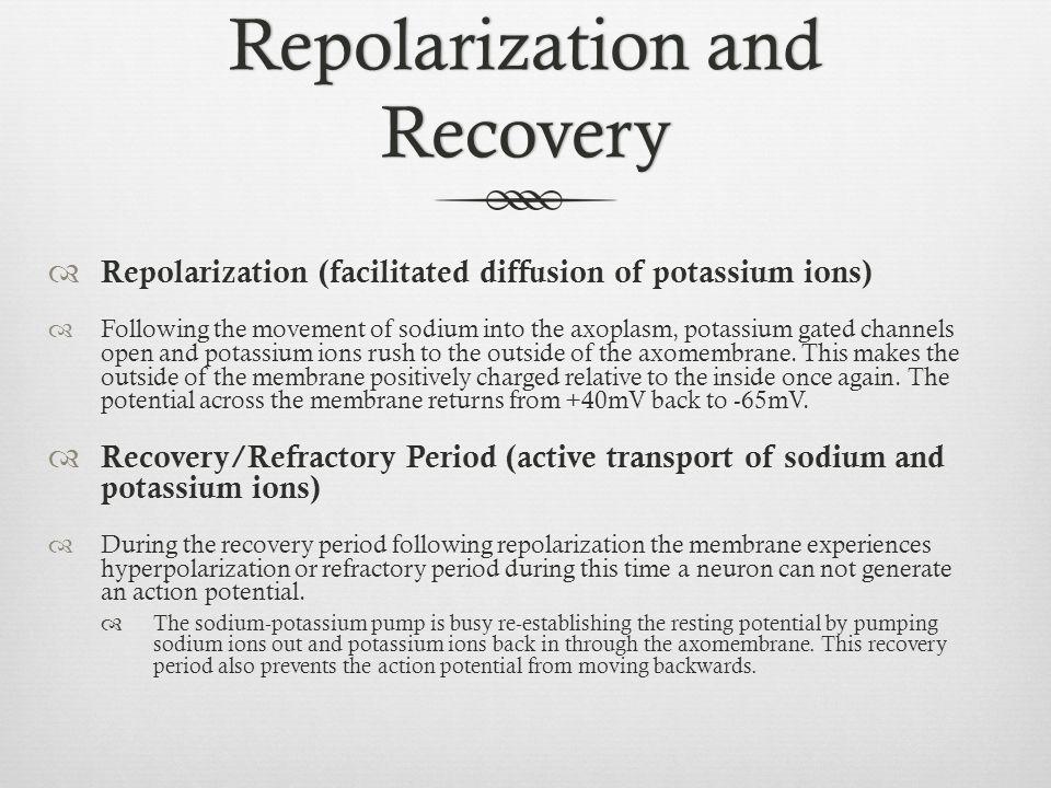 Repolarization and Recovery  Repolarization (facilitated diffusion of potassium ions)  Following the movement of sodium into the axoplasm, potassium
