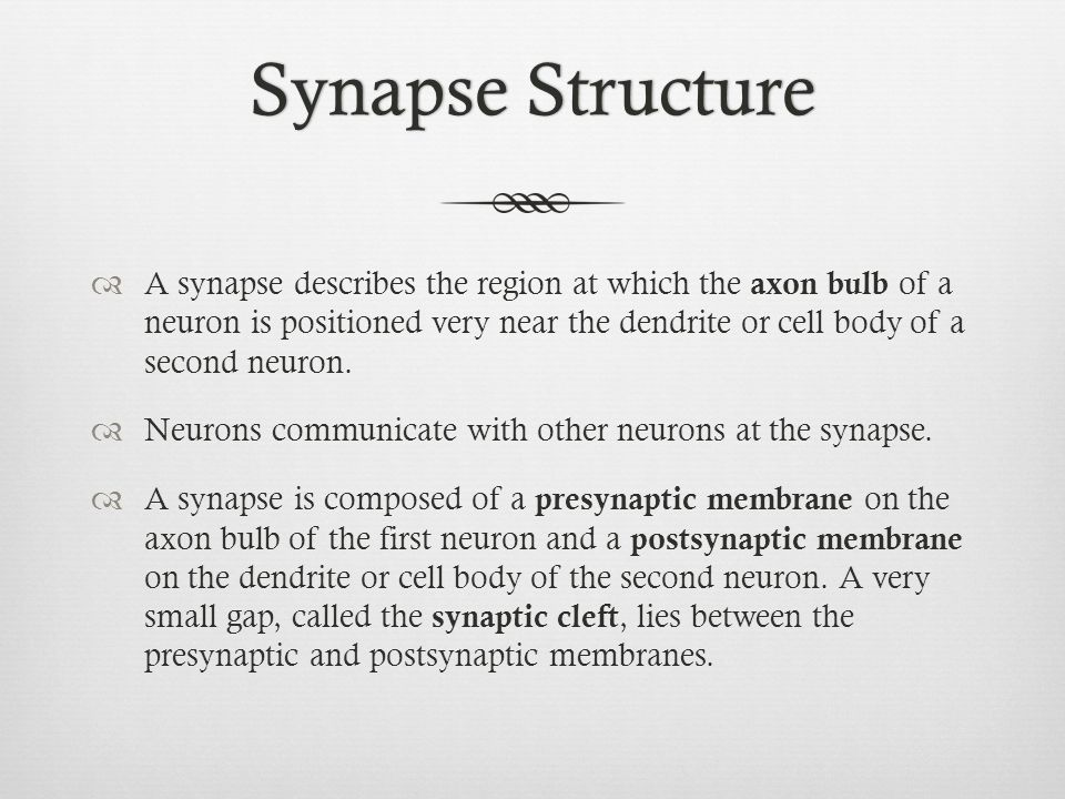 Synapse StructureSynapse Structure  A synapse describes the region at which the axon bulb of a neuron is positioned very near the dendrite or cell bo