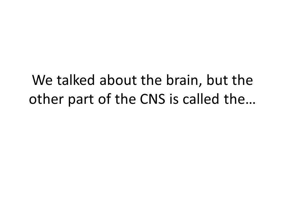 We talked about the brain, but the other part of the CNS is called the…