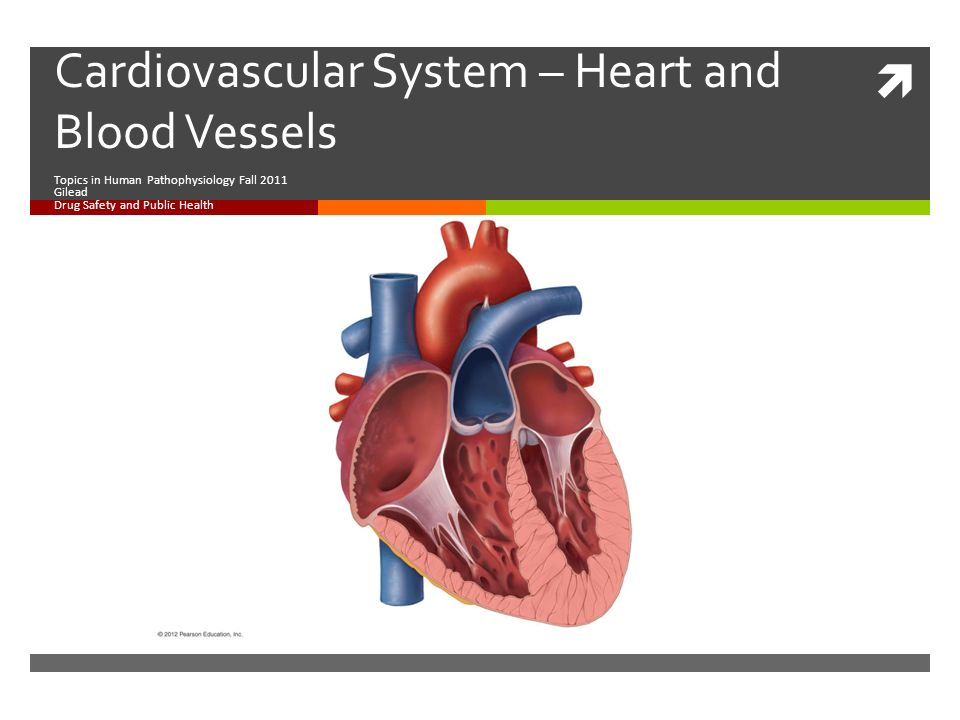  Cardiovascular System – Heart and Blood Vessels Topics in Human Pathophysiology Fall 2011 Gilead Drug Safety and Public Health