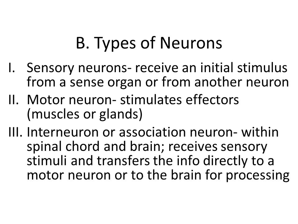 B. Types of Neurons I.Sensory neurons- receive an initial stimulus from a sense organ or from another neuron II.Motor neuron- stimulates effectors (mu