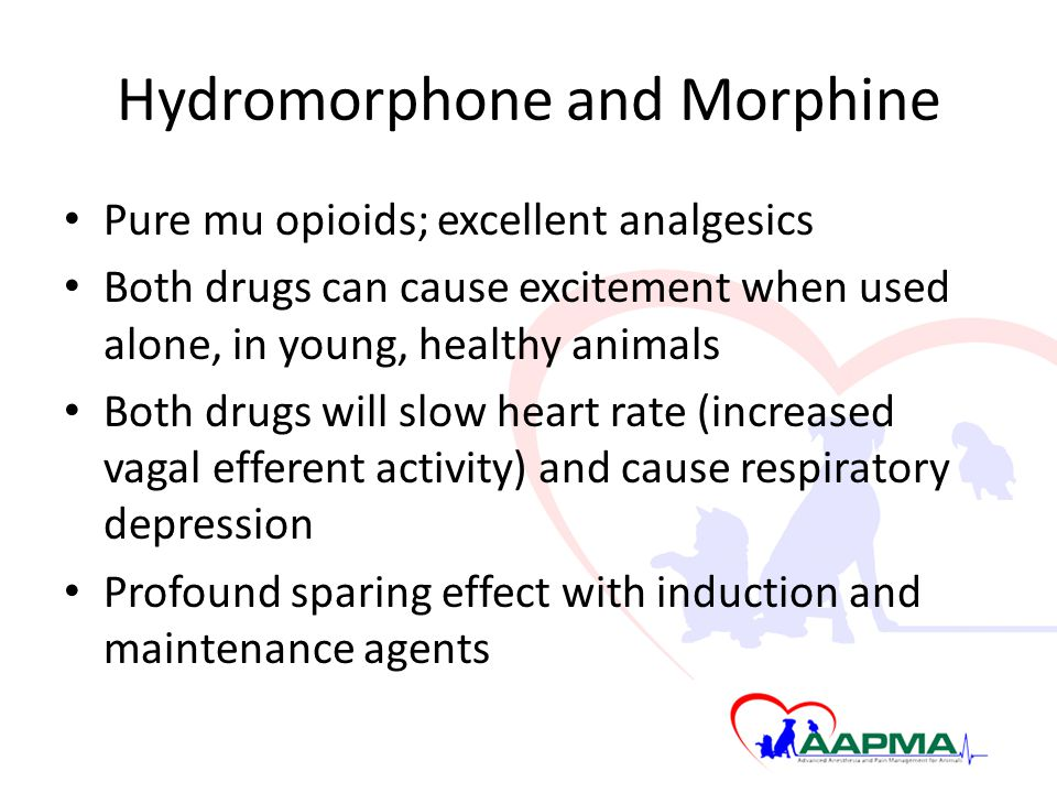 Hydromorphone and Morphine Pure mu opioids; excellent analgesics Both drugs can cause excitement when used alone, in young, healthy animals Both drugs