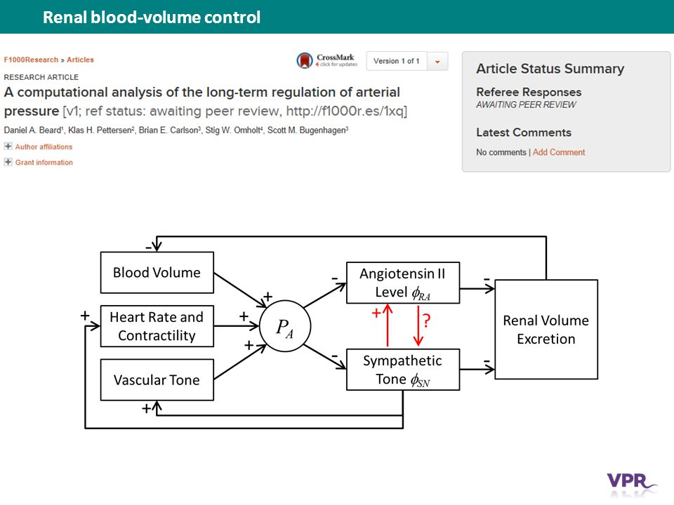 Renal blood-volume control