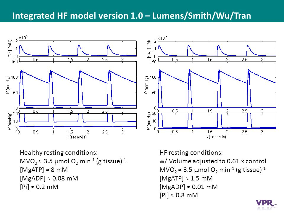 ___ __ ___ ____ __ _________ _______ __ _____ _______ Integrated HF model version 1.0 – Lumens/Smith/Wu/Tran Healthy resting conditions: MVO 2 ≈ 3.5 μmol O 2 min -1 (g tissue) -1 [MgATP] ≈ 8 mM [MgADP] ≈ 0.08 mM [Pi] ≈ 0.2 mM HF resting conditions: w/ Volume adjusted to 0.61 x control MVO 2 ≈ 3.5 μmol O 2 min -1 (g tissue) -1 [MgATP] ≈ 1.5 mM [MgADP] ≈ 0.01 mM [Pi] ≈ 0.8 mM