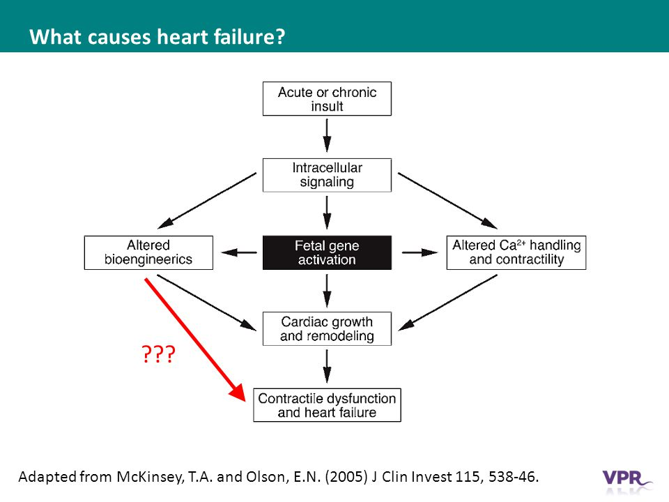What causes heart failure. Adapted from McKinsey, T.A.