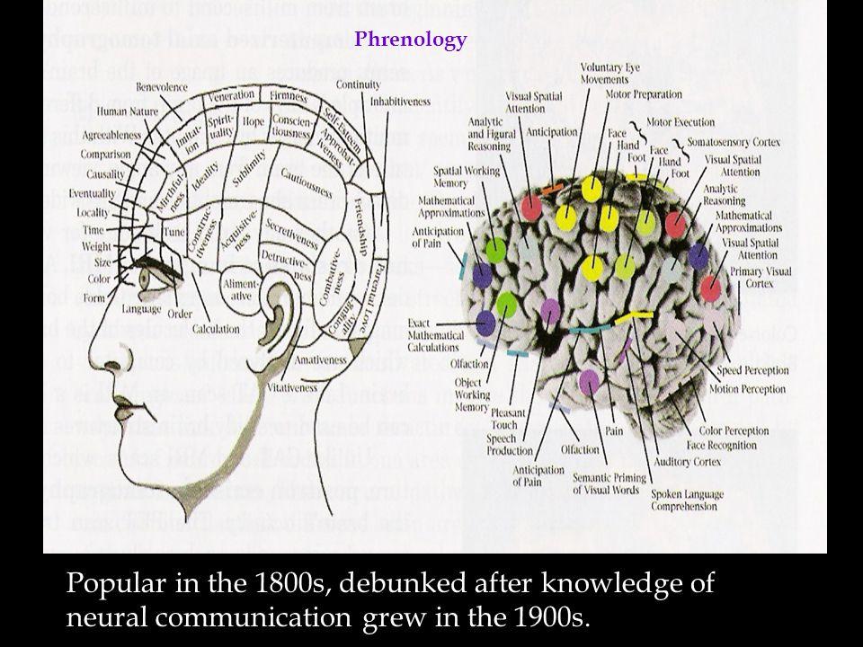 Types of Neurons SensoryMotor Interneurons