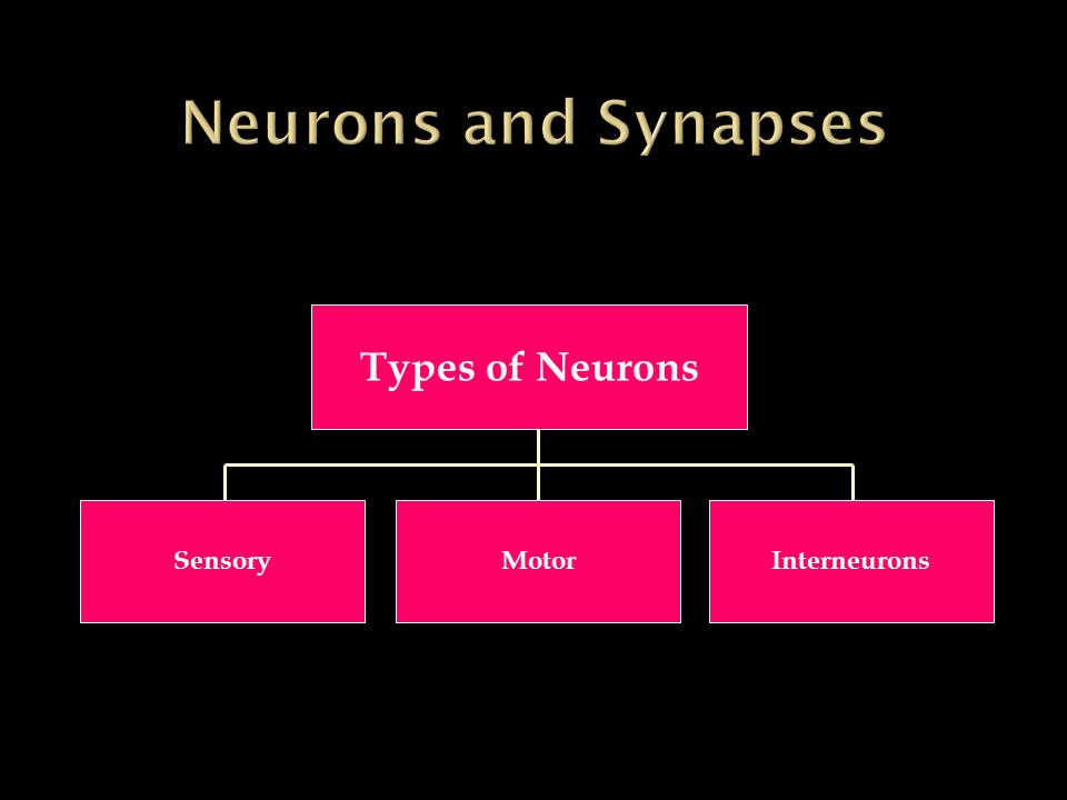 Types of Neurons SensoryMotor Interneurons