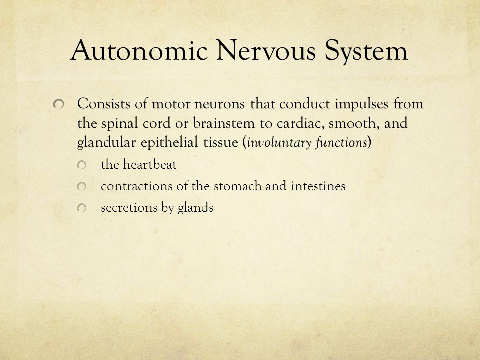 Sympathetic Nervous System Controlled in the thoracic and upper lumbar segments of the spinal cord Functions as an emergency system – takes control when we exercise strenuously and when strong emotions (anger, fear, hate, anxiety) are elicited.