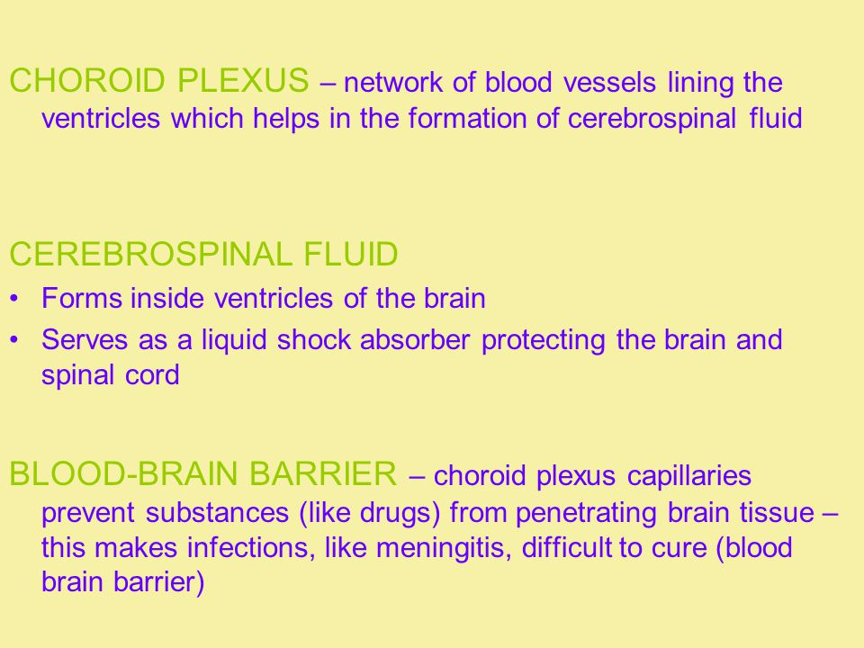 CHOROID PLEXUS – network of blood vessels lining the ventricles which helps in the formation of cerebrospinal fluid CEREBROSPINAL FLUID Forms inside v