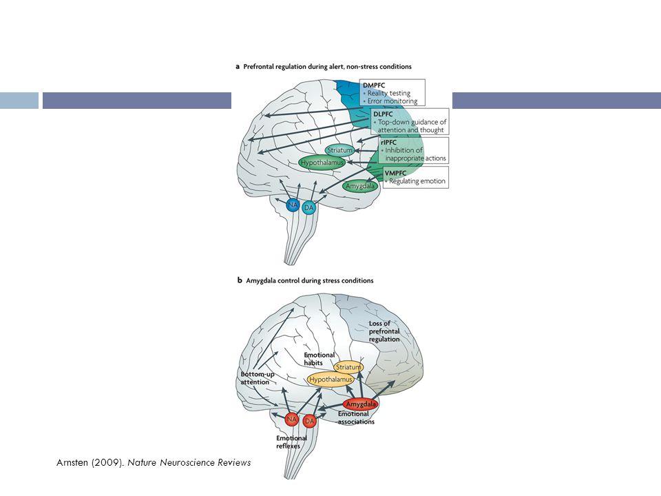 Arnsten (2009). Nature Neuroscience Reviews