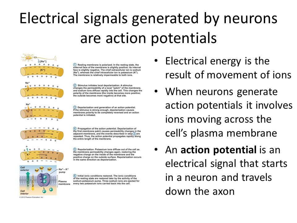 Electrical signals generated by neurons are action potentials Electrical energy is the result of movement of ions When neurons generate action potentials it involves ions moving across the cell's plasma membrane An action potential is an electrical signal that starts in a neuron and travels down the axon