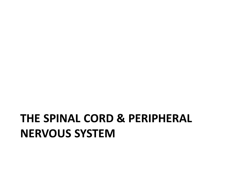 THE SPINAL CORD & PERIPHERAL NERVOUS SYSTEM