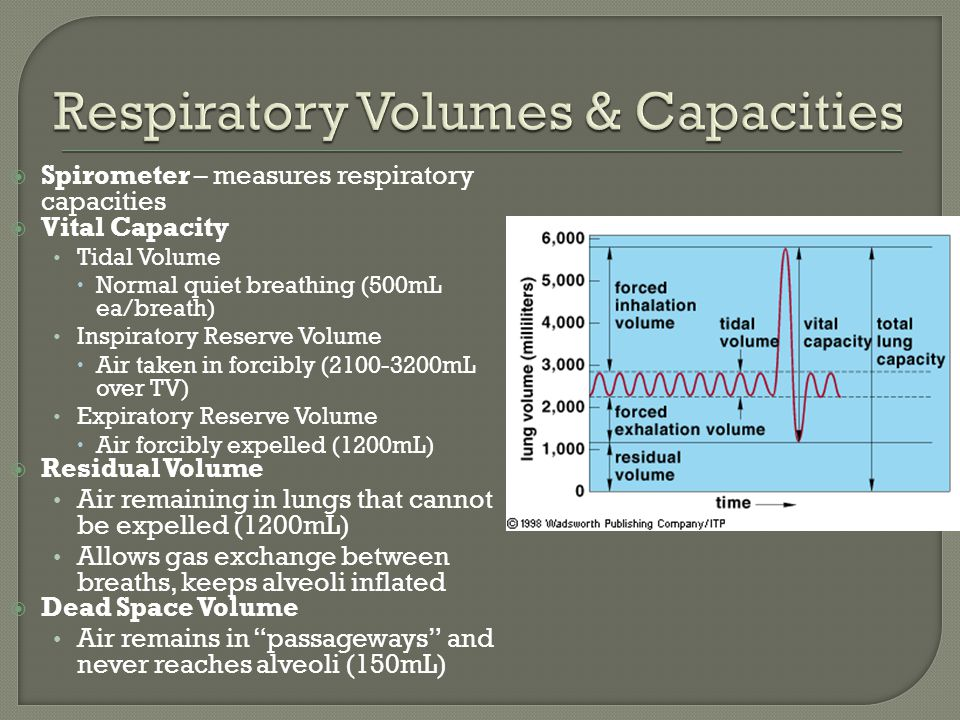  Spirometer – measures respiratory capacities  Vital Capacity Tidal Volume  Normal quiet breathing (500mL ea/breath) Inspiratory Reserve Volume  Air taken in forcibly (2100-3200mL over TV) Expiratory Reserve Volume  Air forcibly expelled (1200mL)  Residual Volume Air remaining in lungs that cannot be expelled (1200mL) Allows gas exchange between breaths, keeps alveoli inflated  Dead Space Volume Air remains in passageways and never reaches alveoli (150mL)