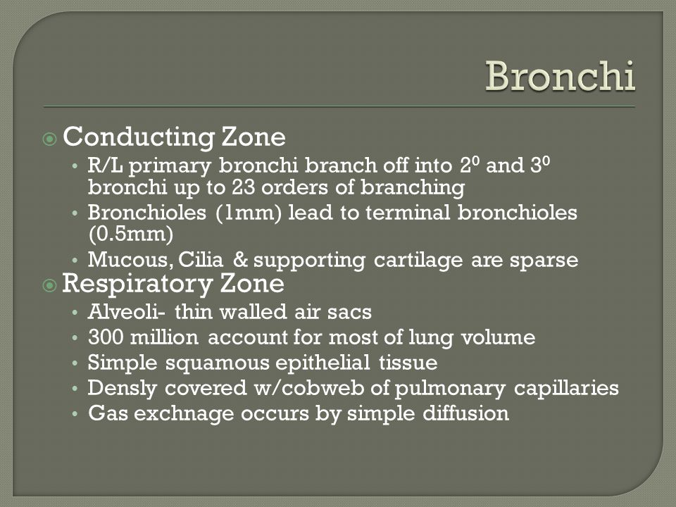  Conducting Zone R/L primary bronchi branch off into 2 0 and 3 0 bronchi up to 23 orders of branching Bronchioles (1mm) lead to terminal bronchioles (0.5mm) Mucous, Cilia & supporting cartilage are sparse  Respiratory Zone Alveoli- thin walled air sacs 300 million account for most of lung volume Simple squamous epithelial tissue Densly covered w/cobweb of pulmonary capillaries Gas exchnage occurs by simple diffusion