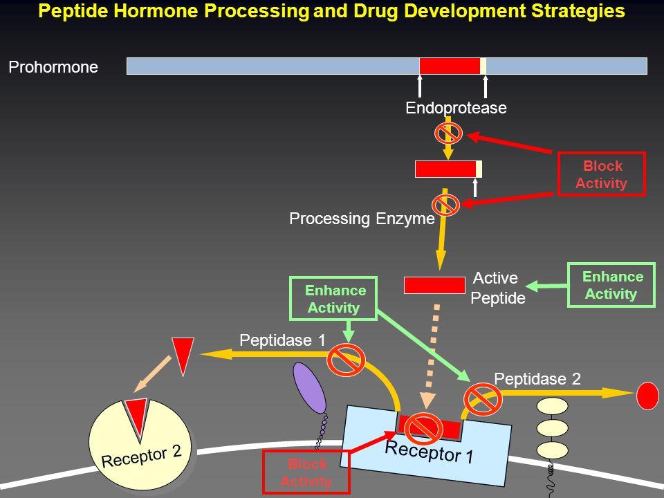 Peptide Hormone Processing and Drug Development Strategies Prohormone Peptidase 1 Endoprotease Active Peptide Processing Enzyme Receptor 1 Receptor 2 Peptidase 2 Block Activity Enhance Activity Block Activity