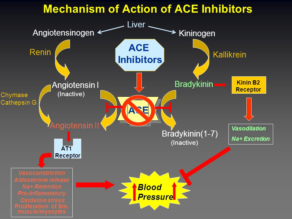 Clinical Use of Angiotensin Receptor Blockers Effects are Similar to those of ACE inhibitors FDA Approved for: Hypertension  All ARBs Congestive Heart Failure  Valsartan approved (second line therapy if ACE inhibitors not tolerated) Diabetic Nephropathy  Irebesartan and Losartan (some believe superior to ACE inhibitors)