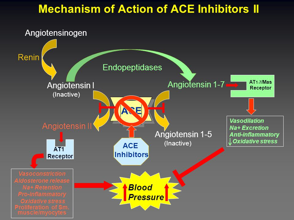 Angiotensinogen Renin Angiotensin I (Inactive) Angiotensin II AT1 Receptor Blood Pressure Endopeptidases Angiotensin 1-7 AT 1-7 /Mas Receptor Angiotensin 1-5 (Inactive) ACE Inhibitors Mechanism of Action of ACE Inhibitors II Vasodilation Na+ Excretion Anti-inflammatory Oxidative stress Vasoconstriction Aldosterone release Na+ Retention Pro-inflammatory Oxidative stress Proliferation of Sm.