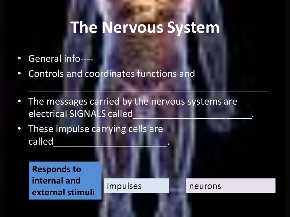 The Nervous System General info---- Controls and coordinates functions and ______________________________________________ The messages carried by the nervous systems are electrical SIGNALS called_______________________.