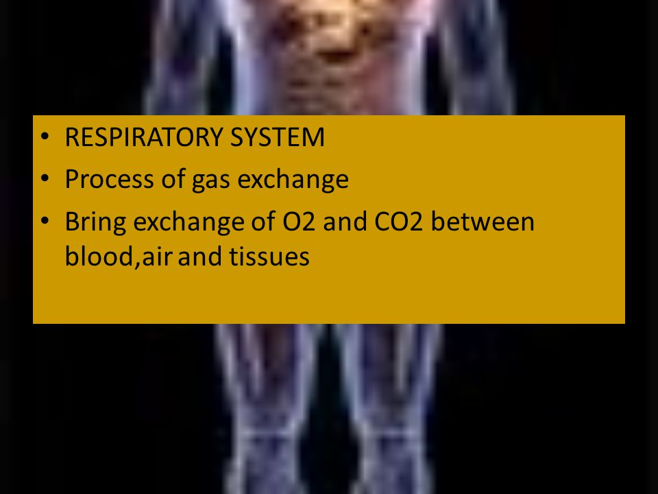 RESPIRATORY SYSTEM Process of gas exchange Bring exchange of O2 and CO2 between blood,air and tissues