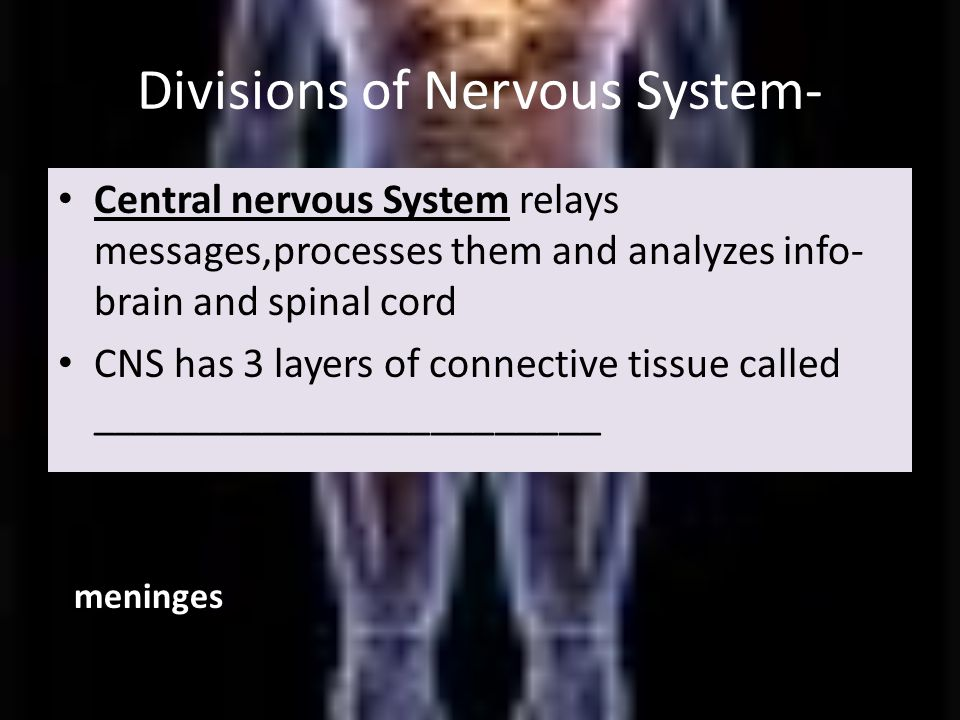 Divisions of Nervous System- Central nervous System relays messages,processes them and analyzes info- brain and spinal cord CNS has 3 layers of connective tissue called ________________________ meninges