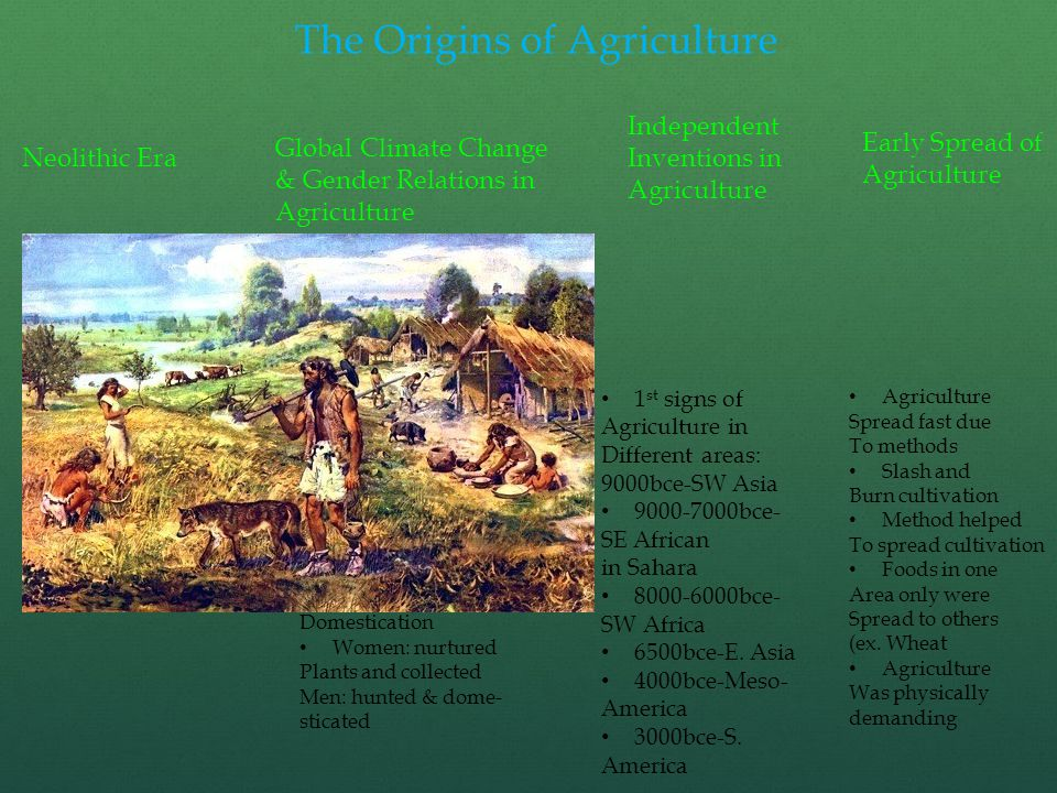 The Origins of Agriculture Neolithic Era Global Climate Change & Gender Relations in Agriculture Independent Inventions in Agriculture Early Spread of Agriculture Aka new stone Age Early stages Of agriculture Use of stone tools 15000 years ago Many fluctuations In temp and rain After ice age Earth get warmer, More rain, stable Climate Neolithic people Took advantage by Growing plants & Domestication Women: nurtured Plants and collected Men: hunted & dome- sticated 1 st signs of Agriculture in Different areas: 9000bce-SW Asia 9000-7000bce- SE African in Sahara 8000-6000bce- SW Africa 6500bce-E.