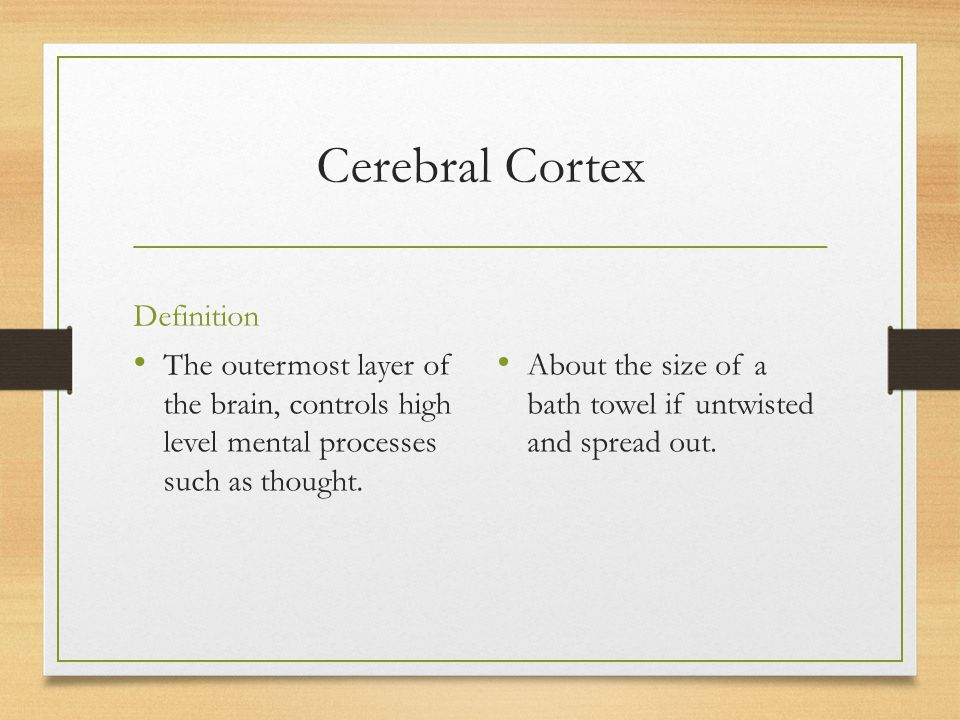 Cerebral Cortex Definition The outermost layer of the brain, controls high level mental processes such as thought. About the size of a bath towel if u