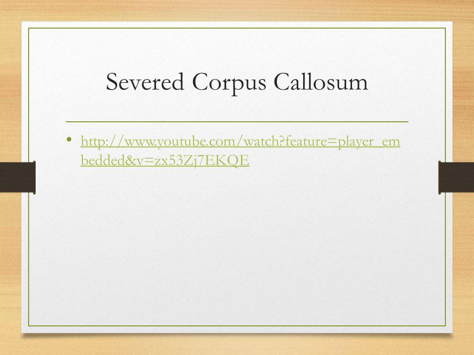 Severed Corpus Callosum http://www.youtube.com/watch?feature=player_em bedded&v=zx53Zj7EKQE http://www.youtube.com/watch?feature=player_em bedded&v=zx