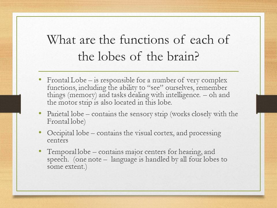What are the functions of the sensory and motor strips.