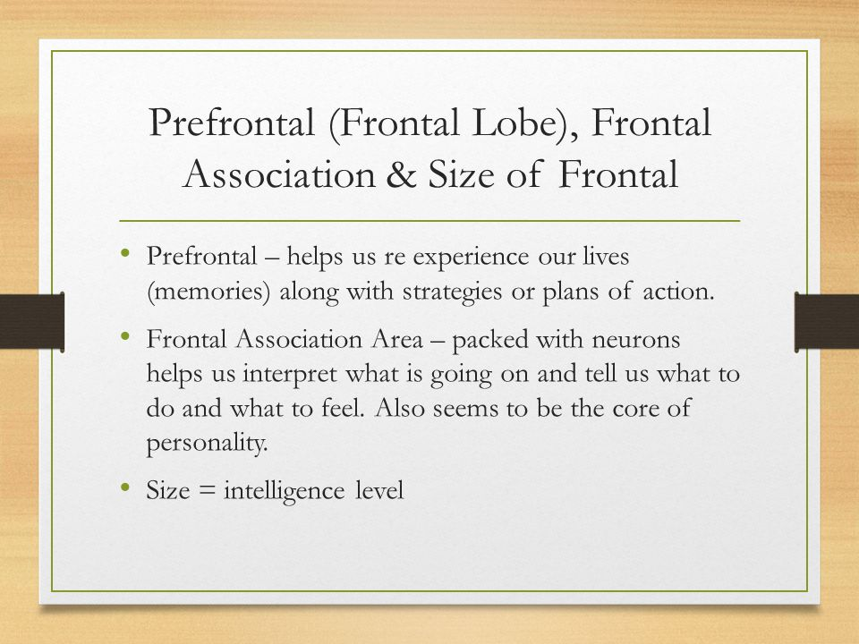 Prefrontal (Frontal Lobe), Frontal Association & Size of Frontal Prefrontal – helps us re experience our lives (memories) along with strategies or pla