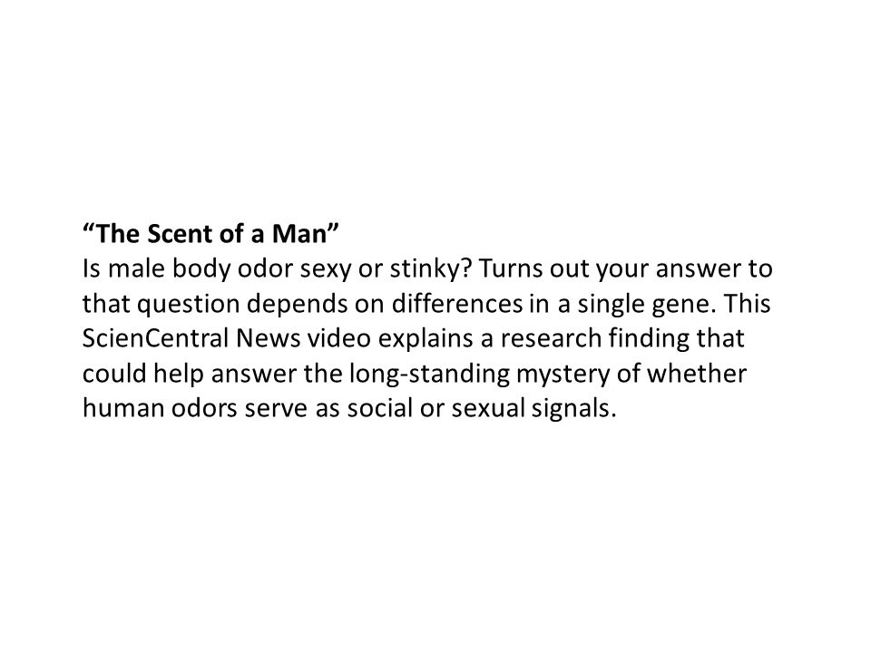 The Scent of a Man Is male body odor sexy or stinky.