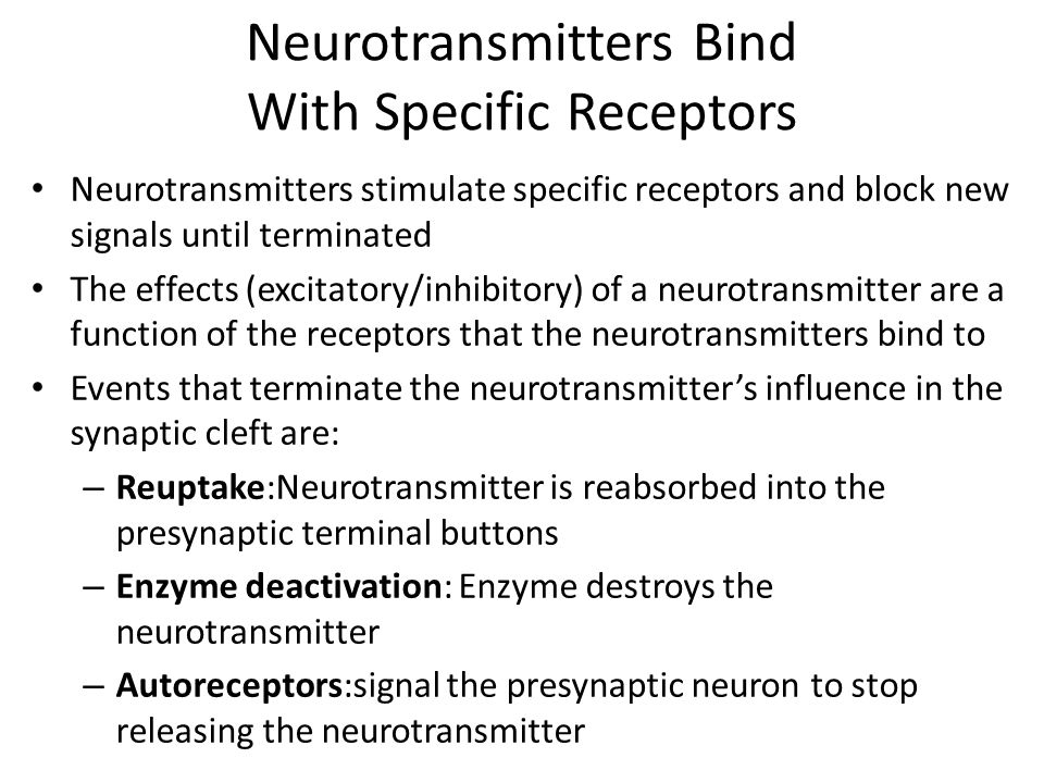 Neurotransmitters Bind With Specific Receptors Neurotransmitters stimulate specific receptors and block new signals until terminated The effects (excitatory/inhibitory) of a neurotransmitter are a function of the receptors that the neurotransmitters bind to Events that terminate the neurotransmitter's influence in the synaptic cleft are: – Reuptake:Neurotransmitter is reabsorbed into the presynaptic terminal buttons – Enzyme deactivation: Enzyme destroys the neurotransmitter – Autoreceptors:signal the presynaptic neuron to stop releasing the neurotransmitter