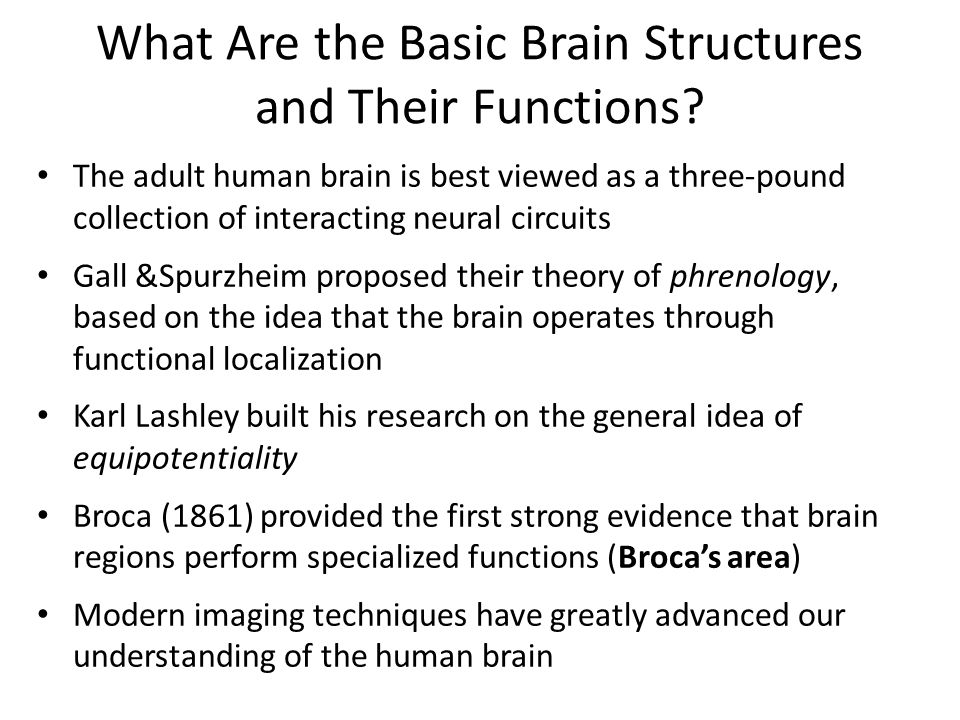 What Are the Basic Brain Structures and Their Functions.